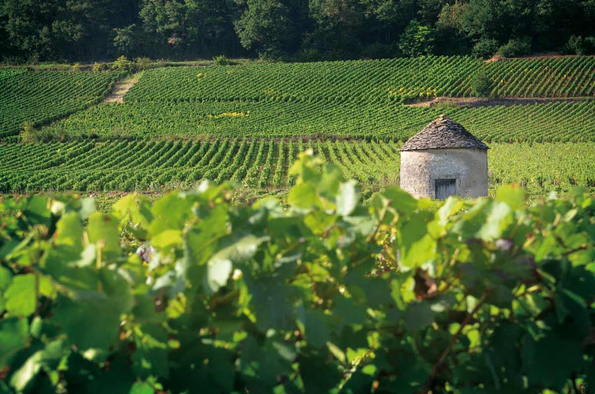 Vidéo : échanges croisés entre winemakers – Ludivine Griveau et Cyrille Jacquelin décrivent les vins des Hospices de Beaune en 3 mots!
