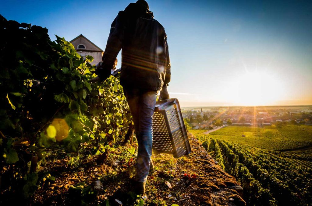 Burgundy-AlbertBichot