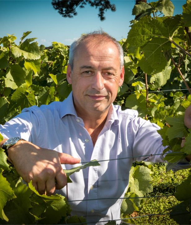 Alberic Bichot dans les vignes du domaine Albert Bichot
