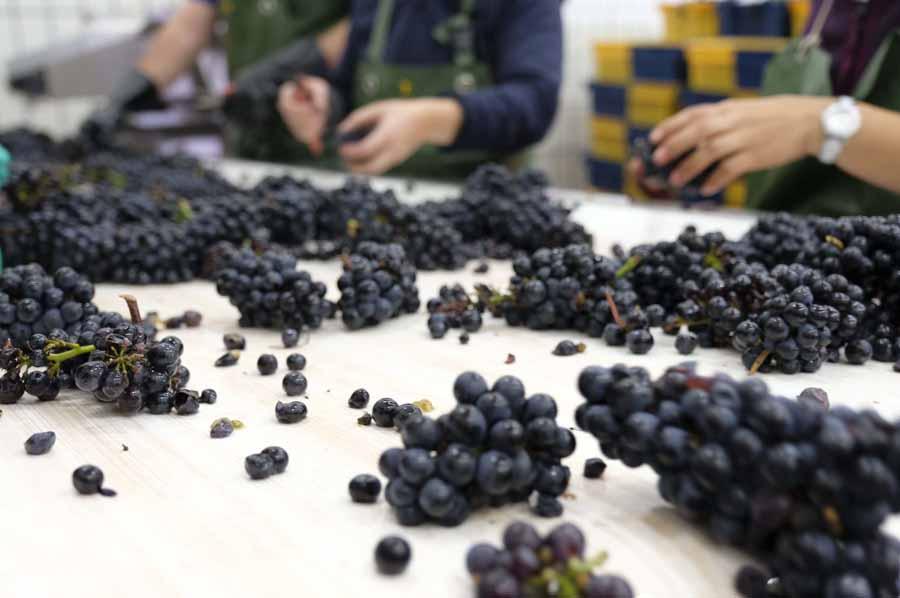 Vin enchères Hospices Beaune