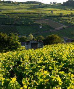 degustation-vin-vignoble-bourgogne