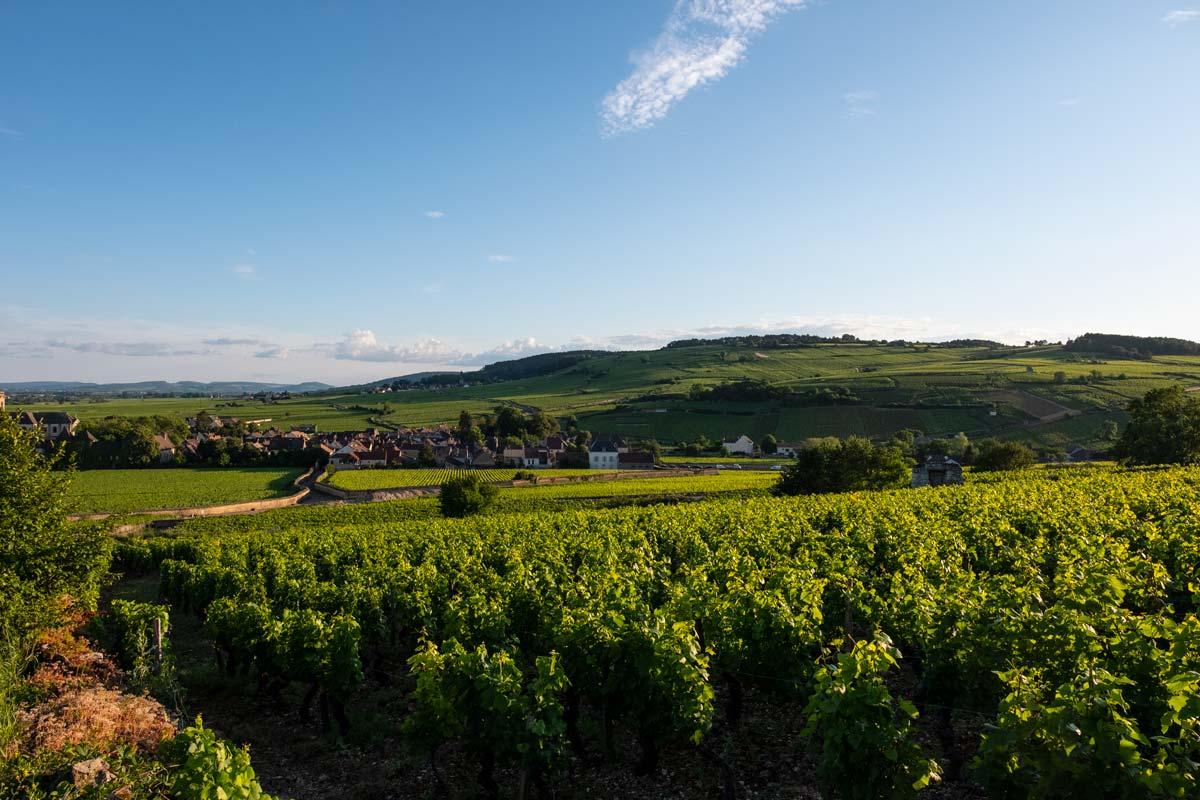 pommard-vin-bourgogne-tourisme
