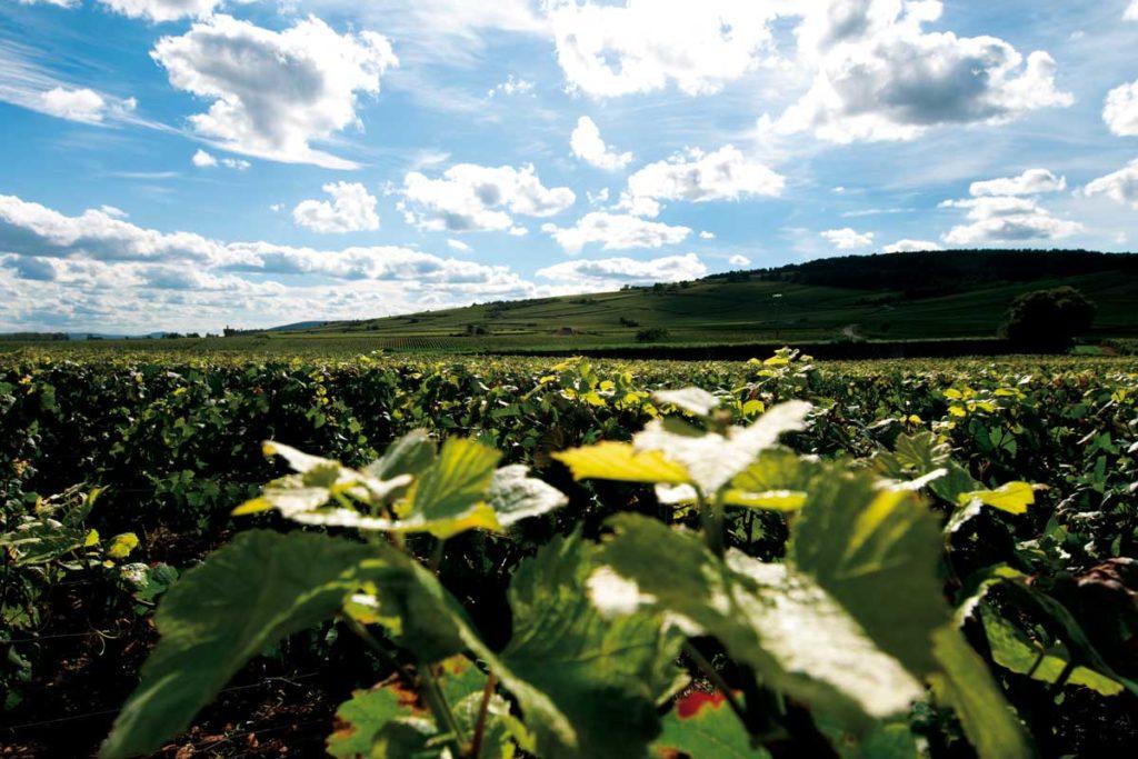tourisme-beaune-bourgogne-vin