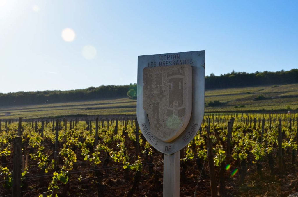 vignoble-bourgogne-hospices-beaune-grand-cru-corton