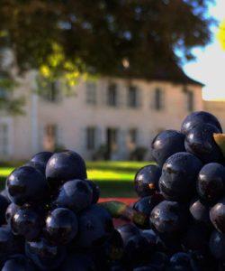 achat-vin-primeur-bourgogne